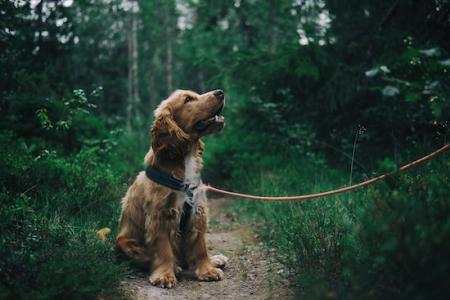 Acorn Ridge Cabin Rentals pet friendly