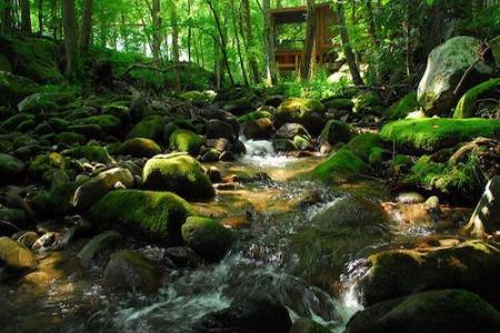 Acorn Ridge Cabin Rentals by Creek
